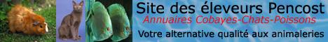 Pencost (www.cobayes.newocx.com) : votre alternative qualité aux animaleries pour vos animaux de compagnie (Cobayes/Chats/Poissons).